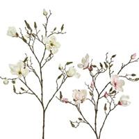 木蓮(マグノリア)・ハナミズキ