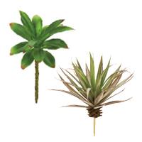 多肉植物(アガベ)